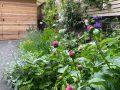 Lockdown garden